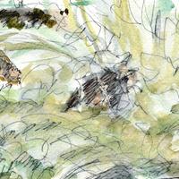 watercolor and pen sketch